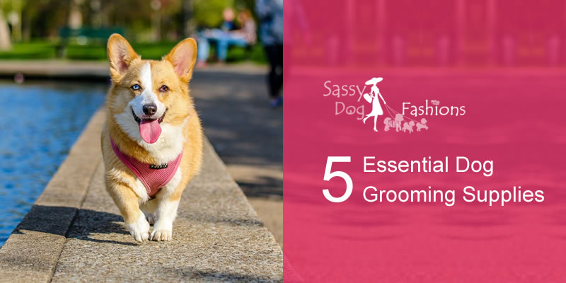 5 Essential Dog Grooming  Supplies
