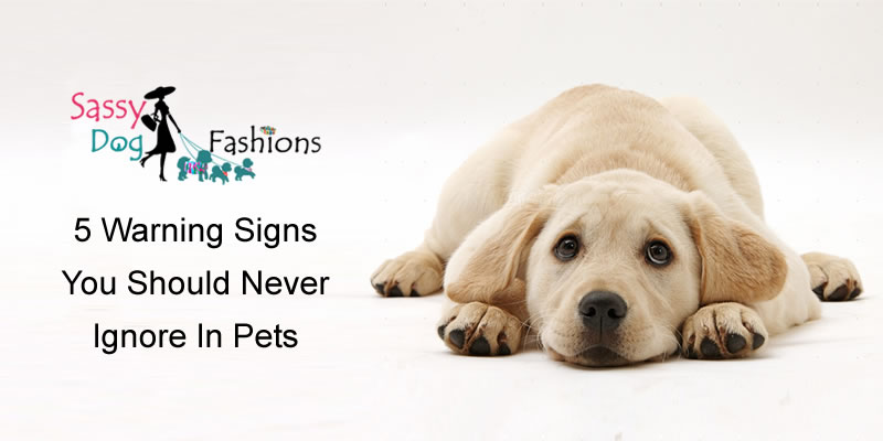 5 Warning Signs You Should Never Ignore In Pets