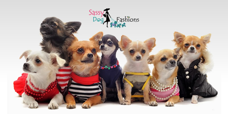 Trends In The Dog Fashion Industry