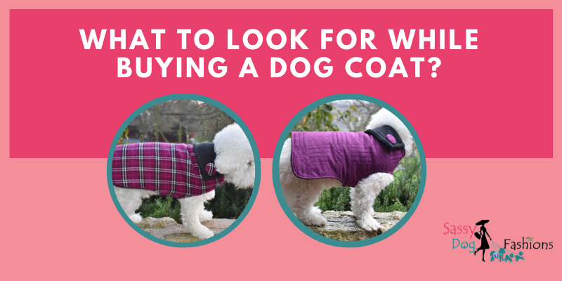 What To Look For While Buying A Dog Coat?
