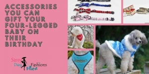Accessories You Can Gift Your Four-legged Baby On Their Birthday