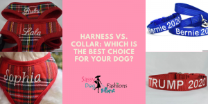 Harness vs. Collar Which Is The Best Choice For Your Dog