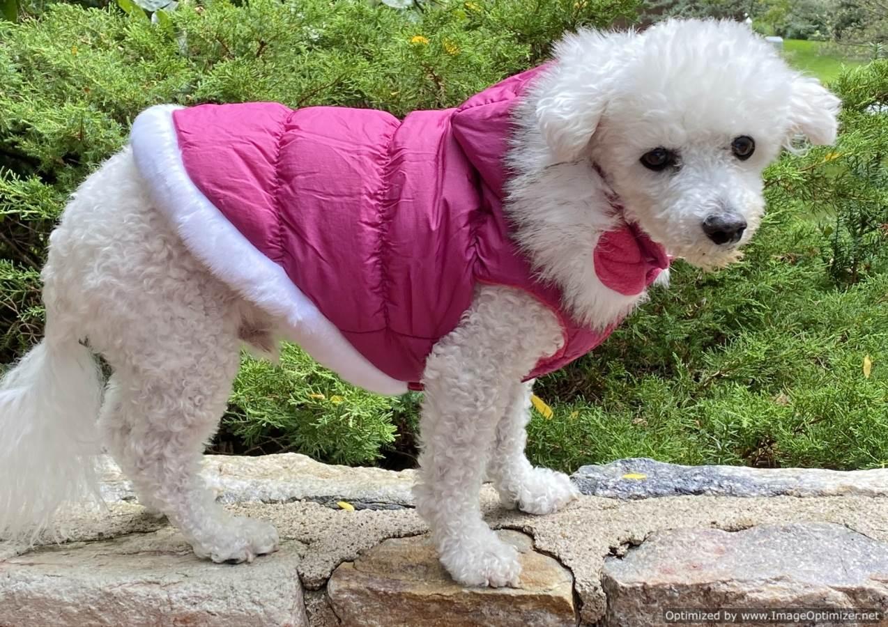 Luxurious Rose Pink Dog Winter Warm Rain Coat Jacket
