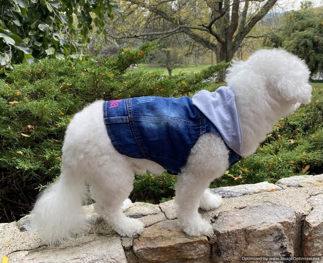Lovely Dog Denim Jacket With Gray Hoodie