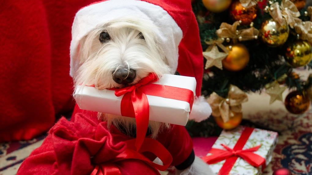 Christmas Dog Gifts