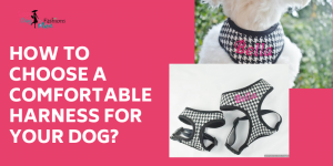 How To Choose A Comfortable Harness For Your Dog