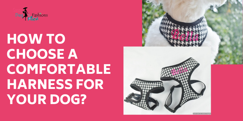 How To Choose A Comfortable Harness For Your Dog?