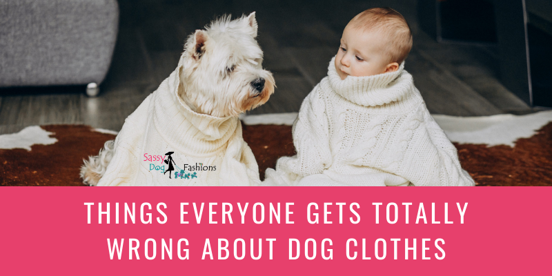 Things Everyone Gets Totally Wrong About Dog Clothes