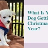 What Is Your Dog Getting For Christmas This Year
