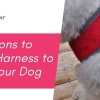 4 Reasons to Use a Harness to Walk Your Dog