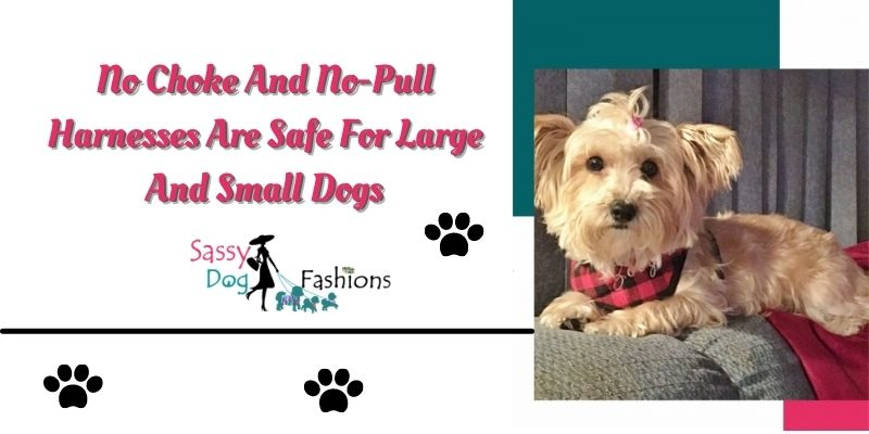 No Choke And No-Pull Harnesses Are Safe For Large And Small Dogs