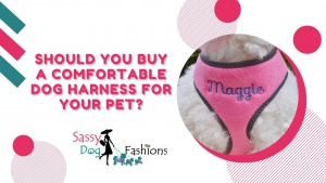 Should you buy a Comfortable Dog harness for your pet