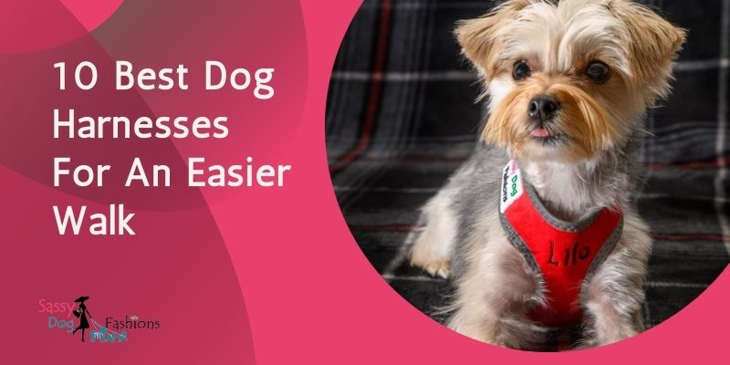10 Best Dog Harnesses For An Easier Walk