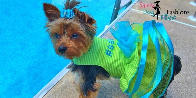 Dress Up Your Pet In Green Apparel