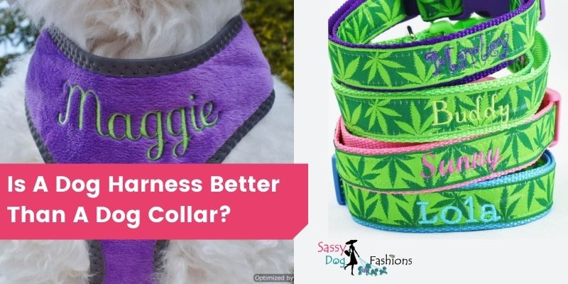 Is A Dog Harness Better Than A Dog Collar?