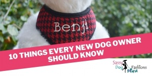 10 Things Every New Dog Owner Should Know