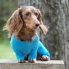 sweet-dreams-embroidered-dog-pajamas-blue-1069