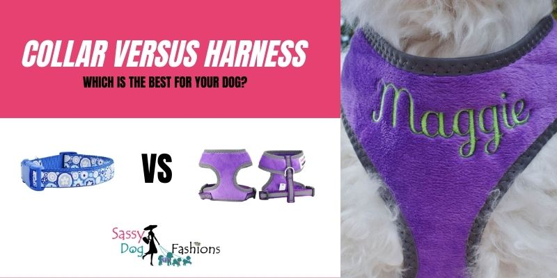 Collar Versus Harness: Which Is The Best For Your Dog?