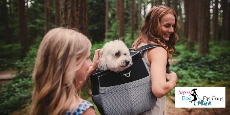 You Should Take Your Furry Friend To Hiking Trails