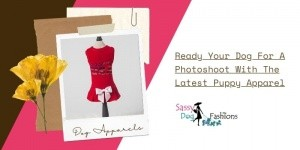 Ready Your Dog For A Photoshoot With The Latest Puppy Apparel