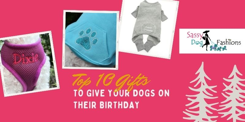 Top 10 Gifts To Give Your Dogs On Their Birthday