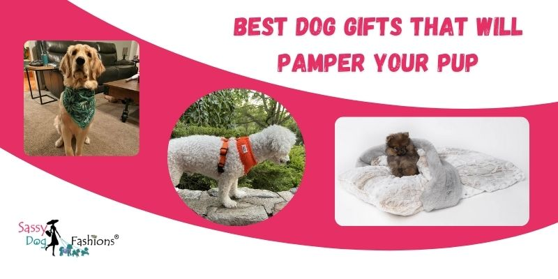 Best Dog Gifts That Will Pamper Your Pup
