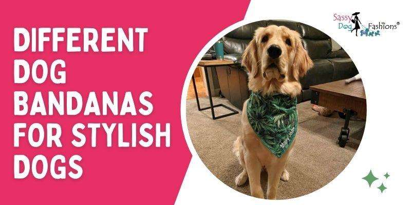 Different Dog Bandanas For Stylish Dogs