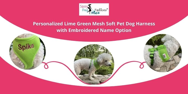 personalized dog harness and leash