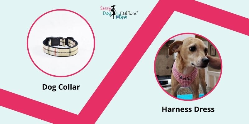 Take Your Dog For Walks With Trending Dog Collars And Harness Dresses