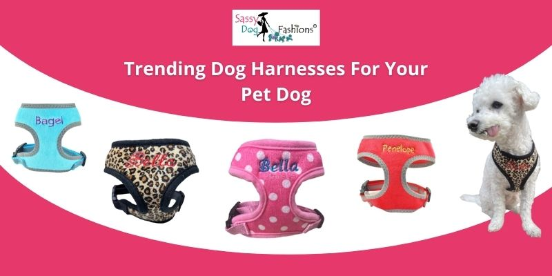 Trending Dog Harnesses For Your Pet Dog