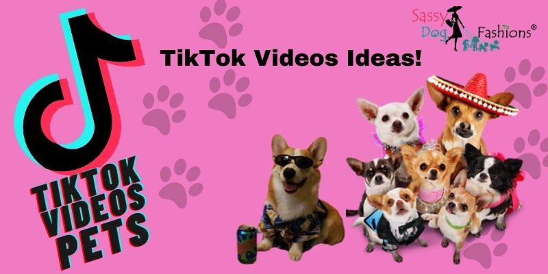 How To Get The Perfect TikTok Pet Videos Every Time
