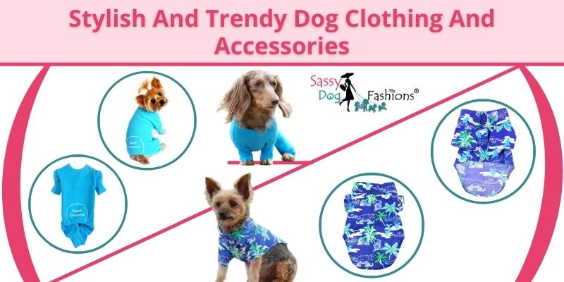 Stylish And Trendy Dog Clothing And Accessories