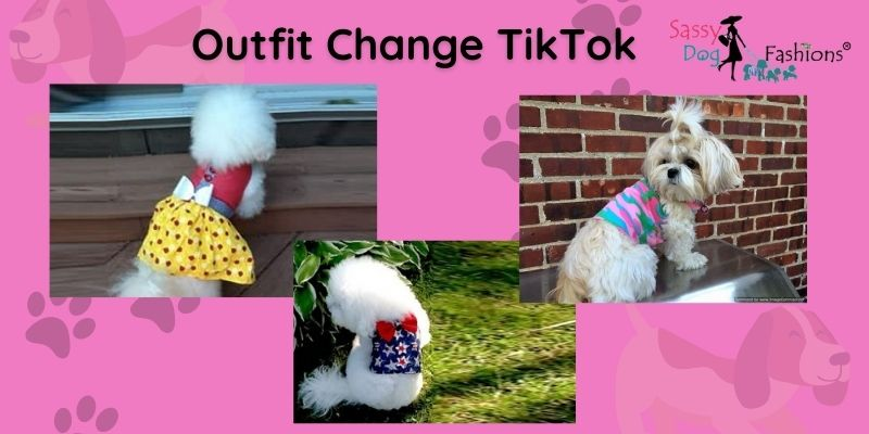 fashionable dog clothes