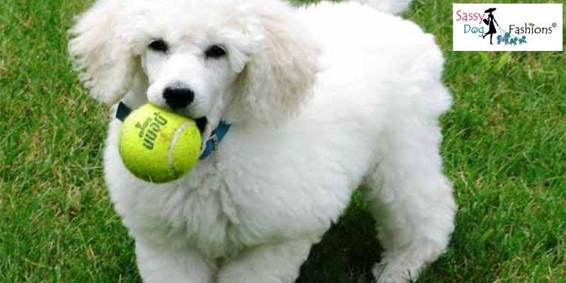 Brilliant Dog Breed
