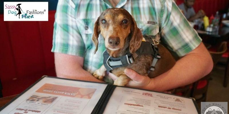 Restaurant Food For Dog