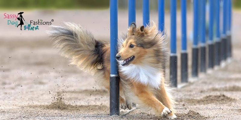 Intelligent Dog Breed